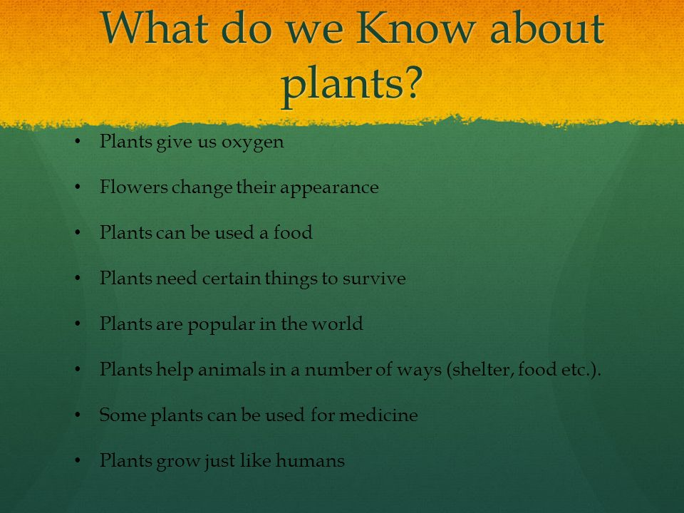 Plants division ppt download for What do we use trees for