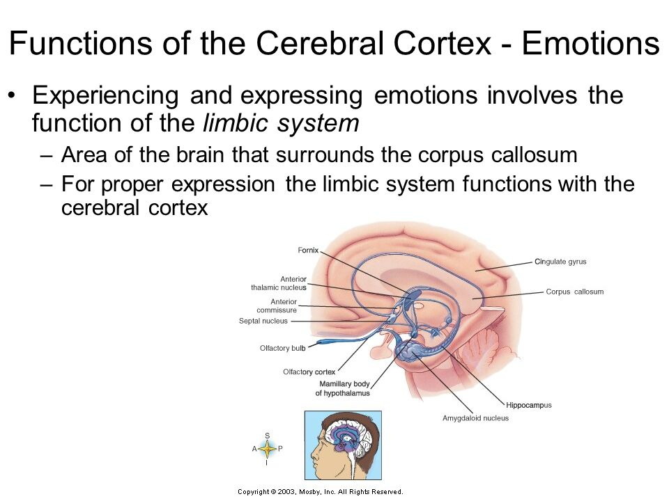 experiencing and expressing emotions View notes - experiencing and expressing emotion notes cl from phys phys 114 at university of washington lecture notes rg 8f date _ expressing emotion how do we express emotions.
