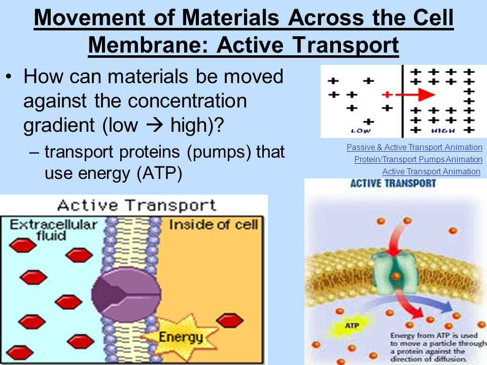 Unit 4: The Cell & Its Environment - ppt video online download