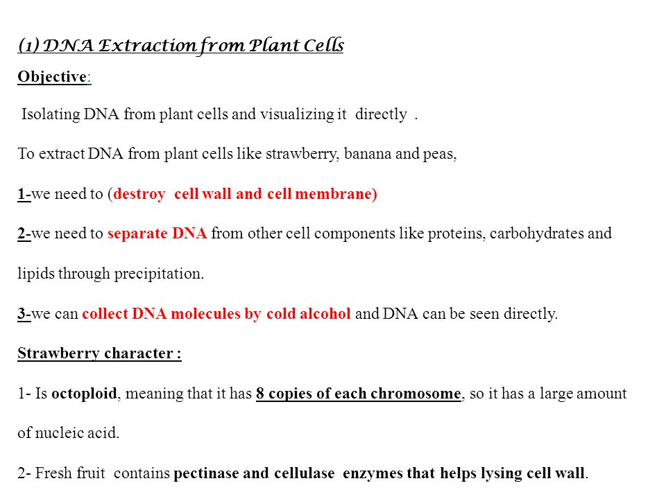 dna extraction lab The purpose of this lab is to extract dna from a banana you will cover the steps of a dna extraction and see them in action these same steps are used when extracting dna for experimental research, forensic science, etc.