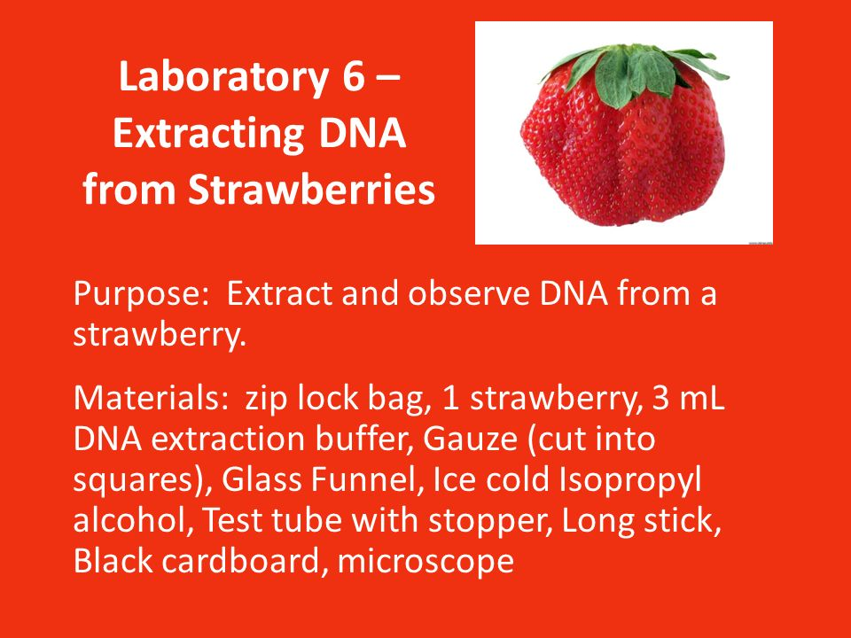 extracting dna from strawberries