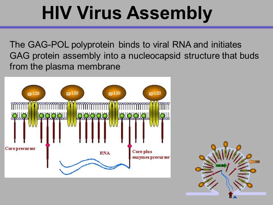 MedChem 401~ Retroviridae - ppt download