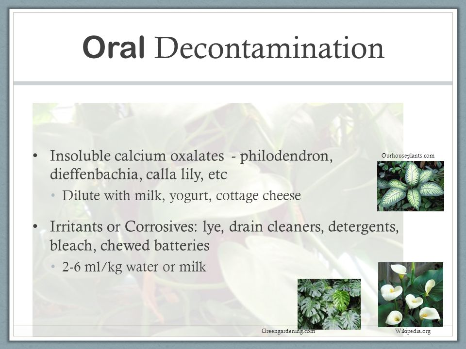 Oral Decontamination Insoluble calcium oxalates - philodendron, dieffenbachia, calla lily, etc. Dilute with milk, yogurt, cottage cheese.