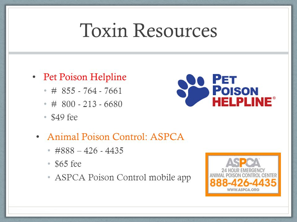 Toxin Resources Pet Poison Helpline Animal Poison Control: ASPCA