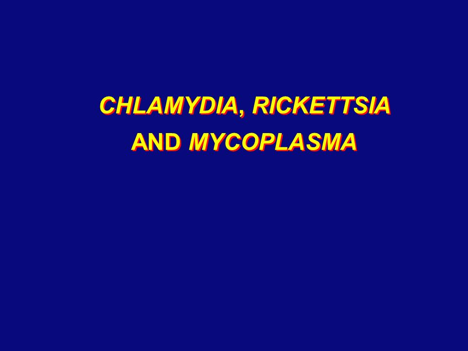 bacillus mycoplasma and escherichia essay Bacteria are a type of biological cell they constitute a large domain of  prokaryotic  among the smallest bacteria are members of the genus  mycoplasma, which  many bacteria (such as e coli) have two distinct modes of  movement: forward.