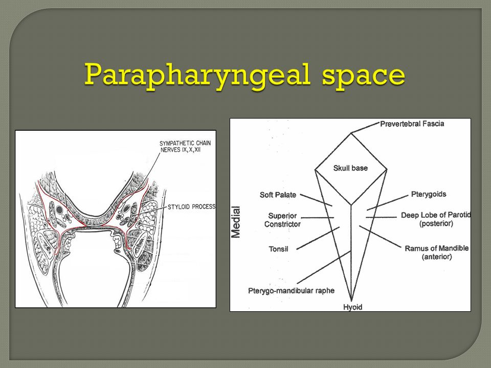 Parapharyngeal space anatomy