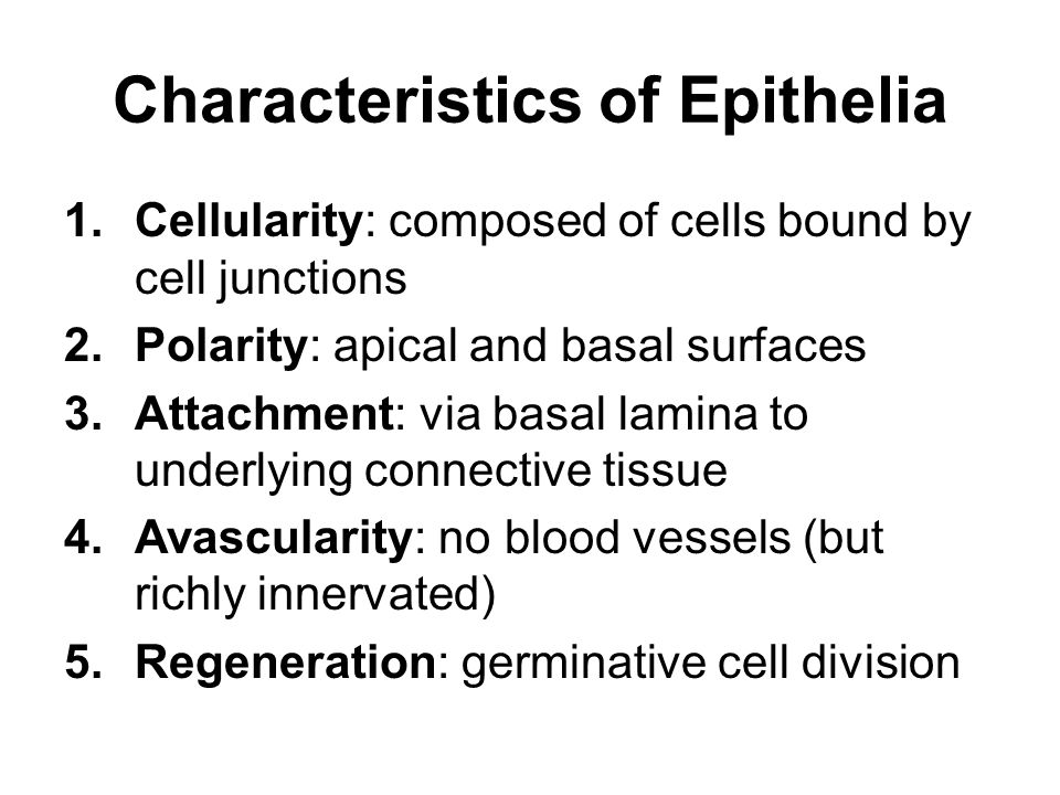 characteristics of epithelial tissue Characteristics of epithelial tissue the human body consists of four types of tissue: epithelial, connective, muscular, and nervous epithelial tissue covers the body, lines all cavities, and composes the glands.