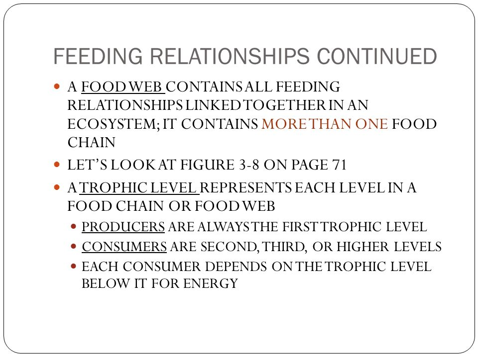 FEEDING RELATIONSHIPS CONTINUED