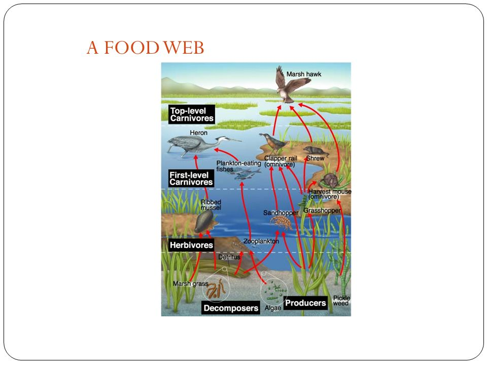 Figure 3-8 A Food Web A FOOD WEB Section 3-2 Go to Section: