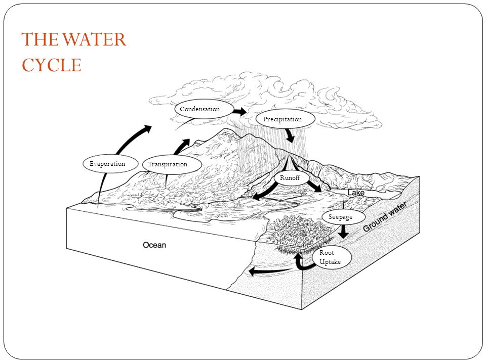 THE WATER CYCLE The Water Cycle Section 3-3 Go to Section: