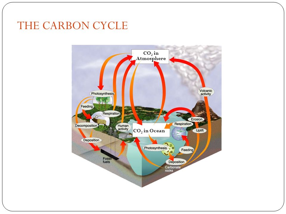 THE CARBON CYCLE Figure 3-13 The Carbon Cycle Section 3-3 CO2 in