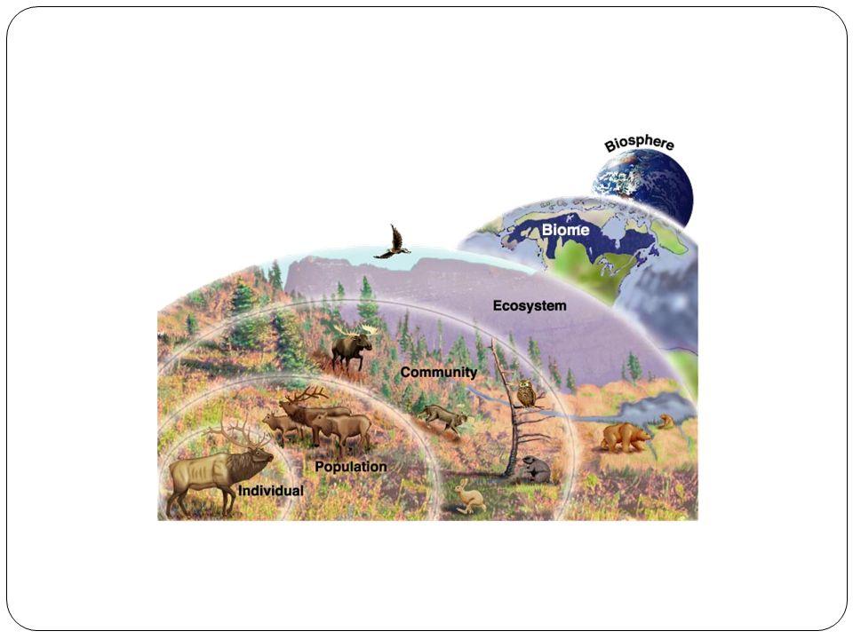 Figure 3-2 Ecological Levels of Organization