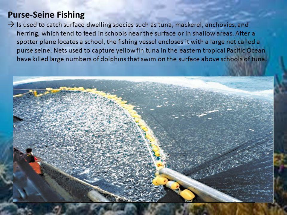 Sustaining biodiversity ppt download for Purse seine fishing