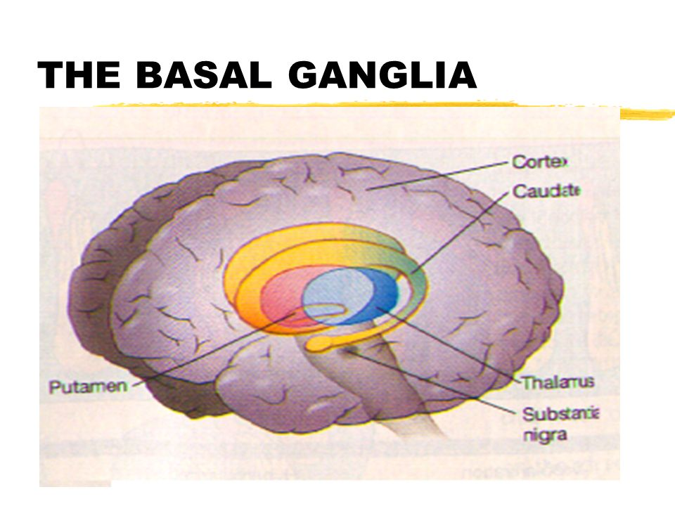 MOTOR SYSTEMS: THE CEREBELLUM AND BASAL GANGLIA - ppt video online ...