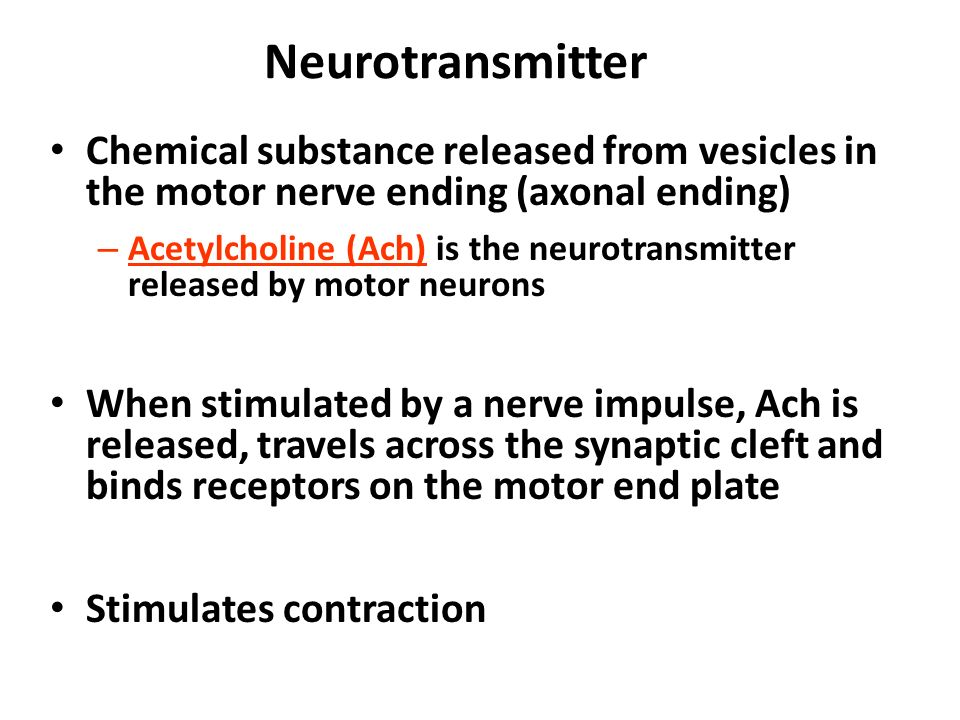 The motor neuron releases a neurotransmitter called for What is a motor neuron