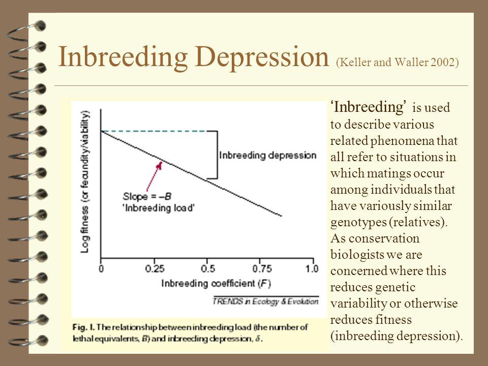 inbreeding depression Inbreeding alan r rogers november 10, 2017 1/30 inbreeding depression in corn genotype frequencies without random mating genotype frequency a 1 a 1 p 2 + pqf a 1 a 2 2 pq (1 f ) a 2 a 2 q 2 + pqf.