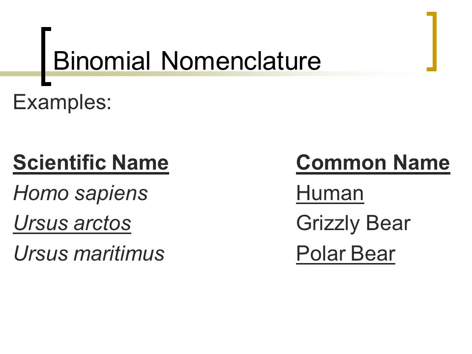 binomial nomenclature As martini used neither latin terminology nor binomial nomenclature, his ideas were overlooked: nevertheless, linnaeus's hierarchical classification and binomial nomenclature, much modified, have remained standard for over 200 years: to avoid confusion with binomial nomenclature used in naming body fossils, trace fossils are named as ichnogenera and ichnospecies.