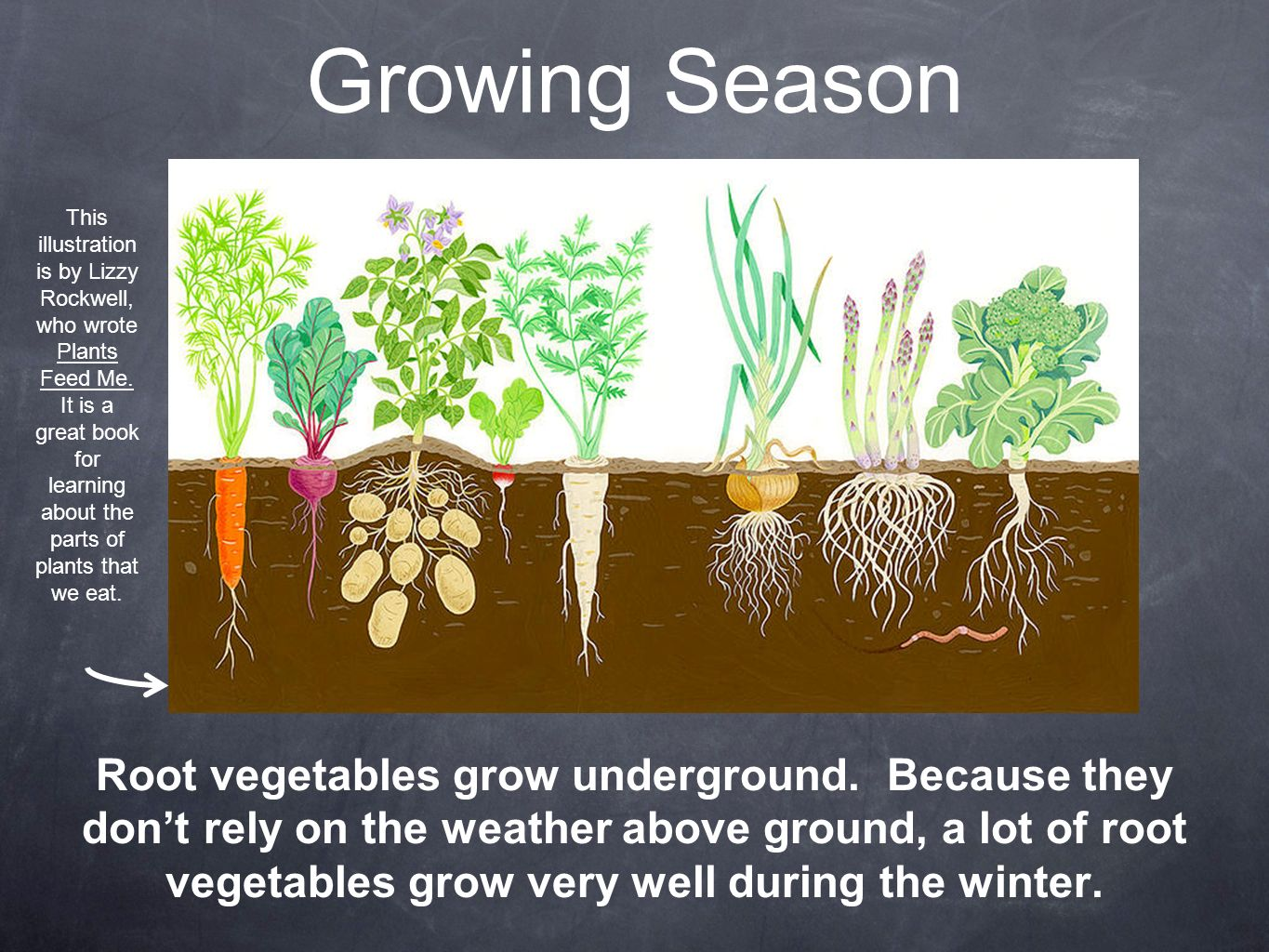 Root Vegetables. - ppt video online download