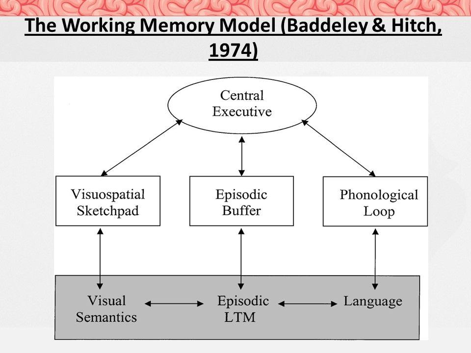 Hd Wallpapers Working Memory Model Diagram Hdhd3deg