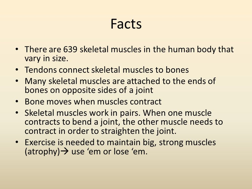 muscular system mrs. yanac. - ppt download, Muscles