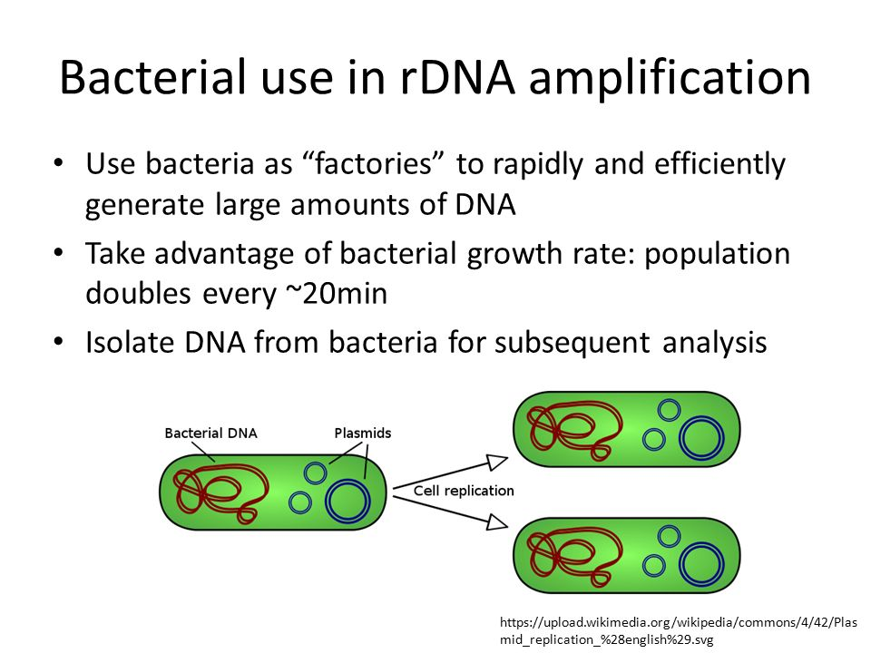 how to get dna into bacteria