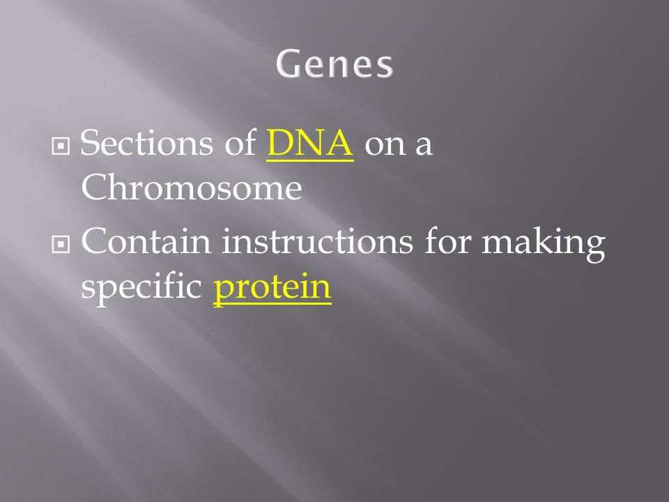 Genes Sections of DNA on a Chromosome