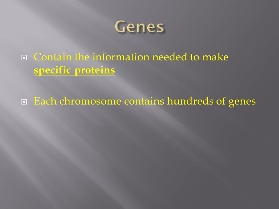 Genes Contain the information needed to make specific proteins