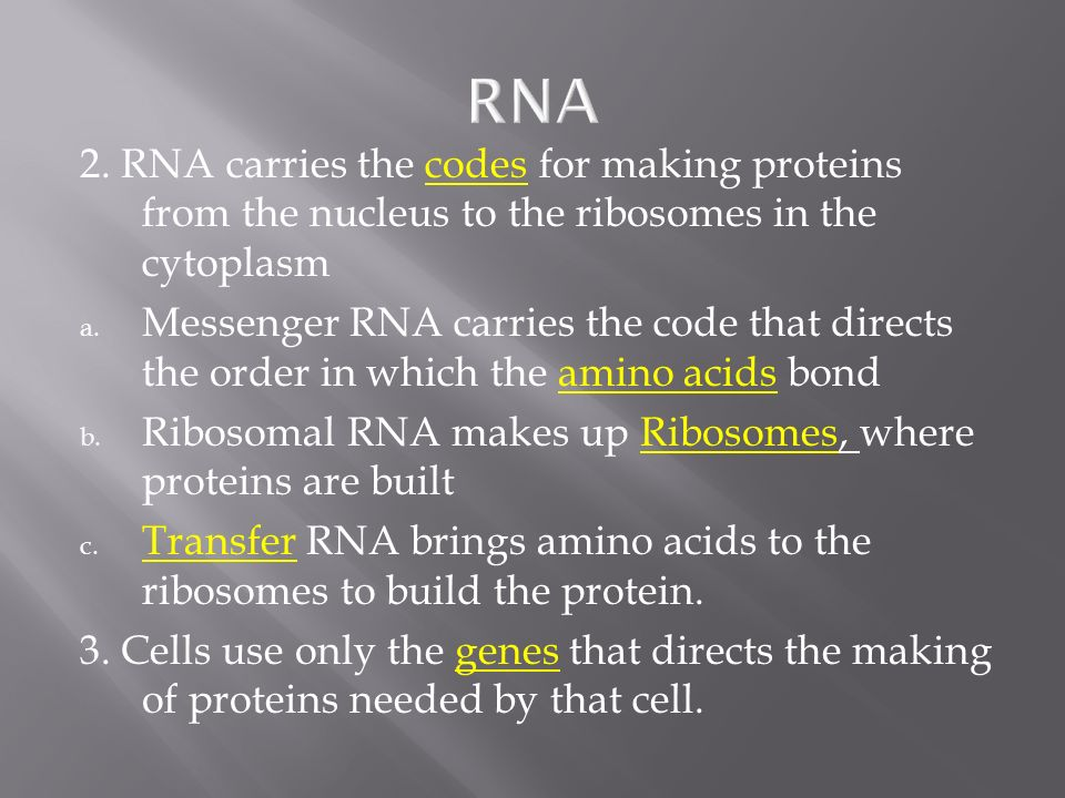 RNA 2. RNA carries the codes for making proteins from the nucleus to the ribosomes in the cytoplasm.