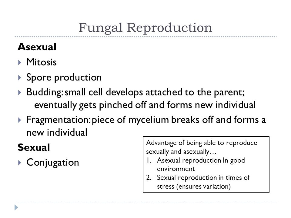 When is asexual reproduction advantageous images 781