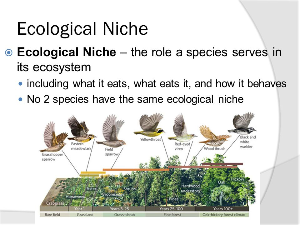 ecological niche The ecological niche receives attention from people with diverse back- grounds: philosophers, bioinformaticians and computer scientist, and ecologists they all emphasise different aspects of the ecological niche, use different estab.