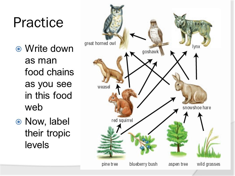 chapter 2 5 food webs and ecological pyramids