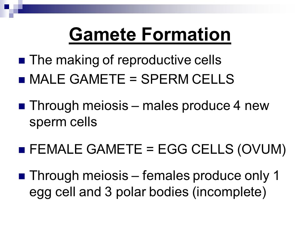gamete formation Meiosis occurs in humans, giving rise to the haploid gametes, the sperm and egg  cells in males, the process of gamete production is known as.