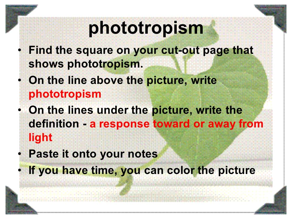 phototropism organisms response to light Phototropism is the growth of an organism which responds to a light stimulus it is  most often observed in plants, but can also occur in other organisms such as.