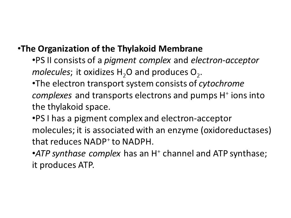thylakoid oxygen photosythesis produces Photosynthesis is the conversion of the energy of sunlight into  a form of  photosynthesis that does not produce oxygen (anoxygenic photosynthesis)   cyanobacteria contain thylakoid membranes very similar to those in.