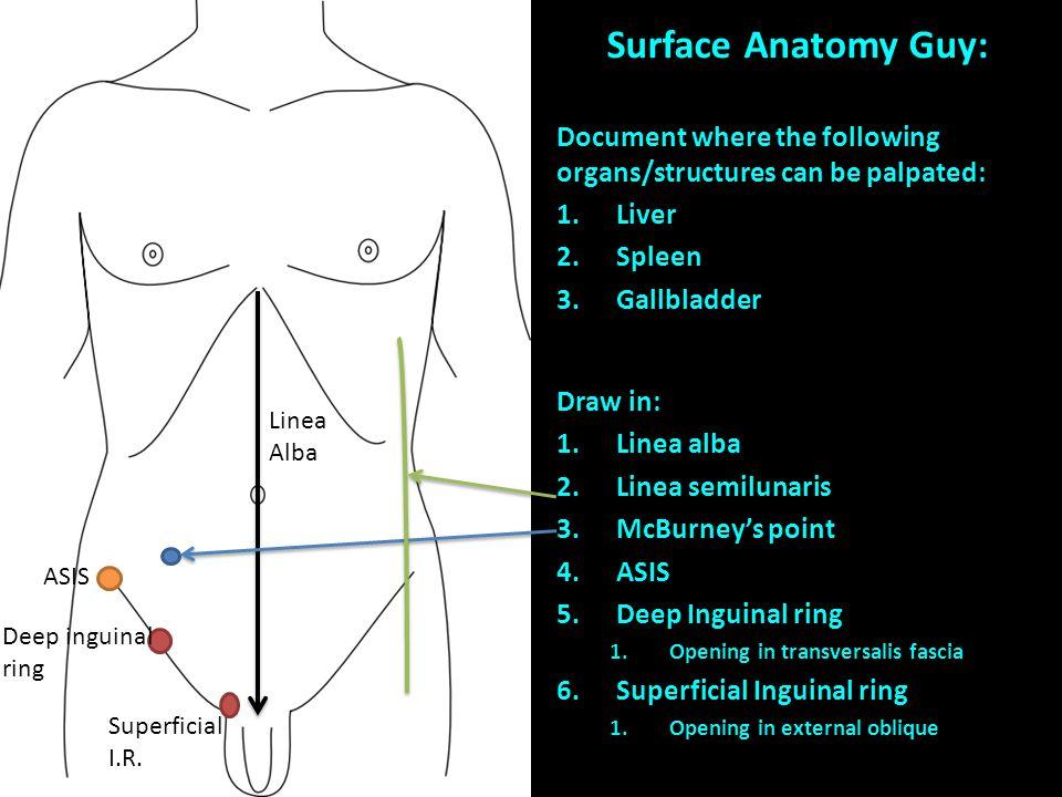Surface anatomy of abdomen
