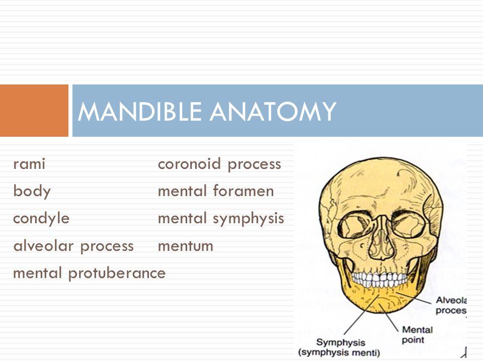 Mandible Anatomy Kubreforic