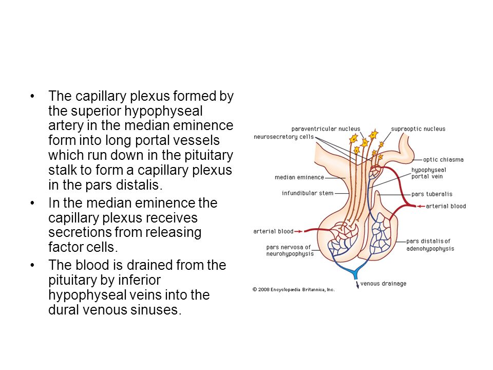 pituitary gland dr. lubna nazli asst. prof anatomy rakmhsu dt: 15, Human Body