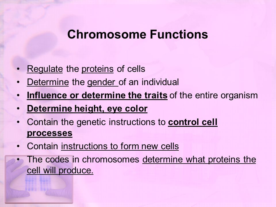 chromosome structure and function pdf
