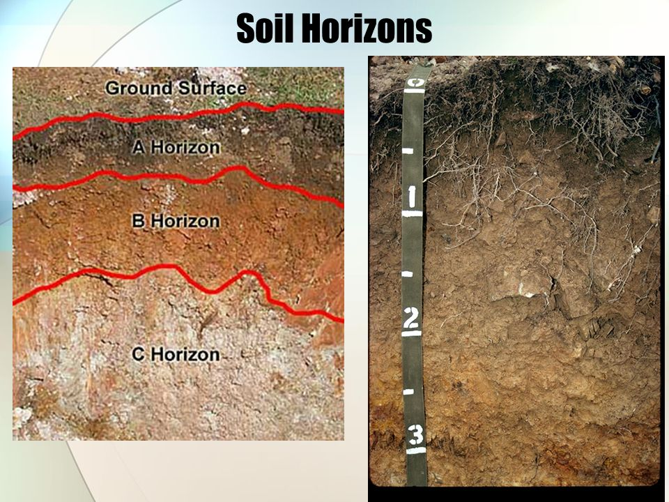Soils ppt download for Soil horizons