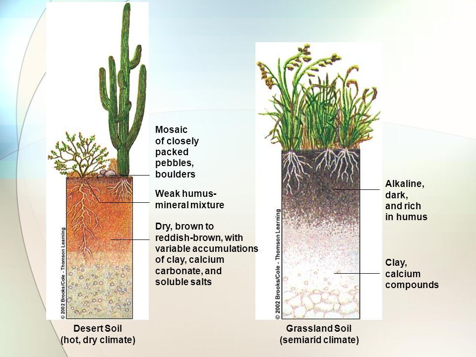 Soils ppt download for Rich soil definition