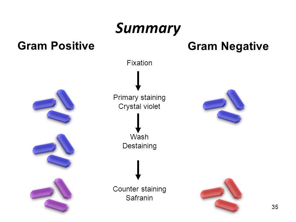 technique de coloration de gram pdf