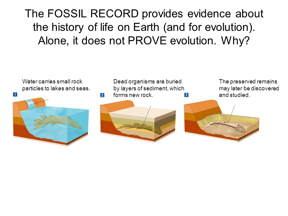 a history of life on earth and the fossil records Tell us the fossil record is an archive showing the history of life on earth   earth those fossils were not strewn around the mountain peaks as the water.