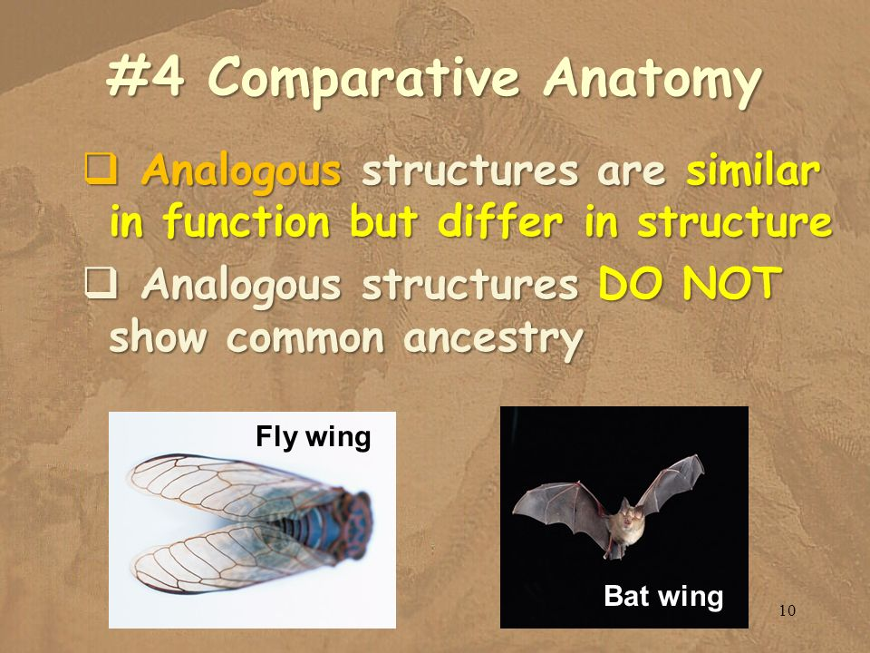 #4 Comparative Anatomy Analogous structures are similar in function but differ in structure. Analogous structures DO NOT show common ancestry.