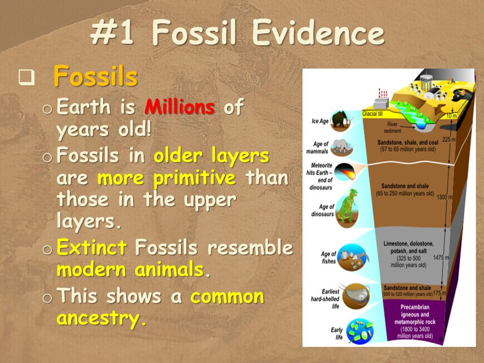 #1 Fossil Evidence Fossils Earth is Millions of years old!