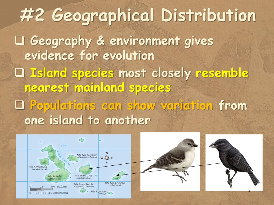 #2 Geographical Distribution