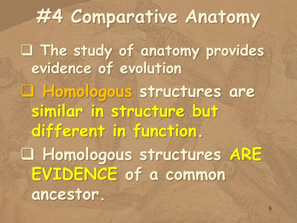 #4 Comparative Anatomy The study of anatomy provides evidence of evolution.