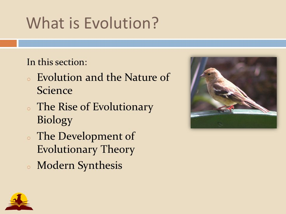 an introduction to the nature of primate evolution Read chapter chapter 2: major themes in evolution: today many school students are shielded from one of the most important concepts in modern science: evol.