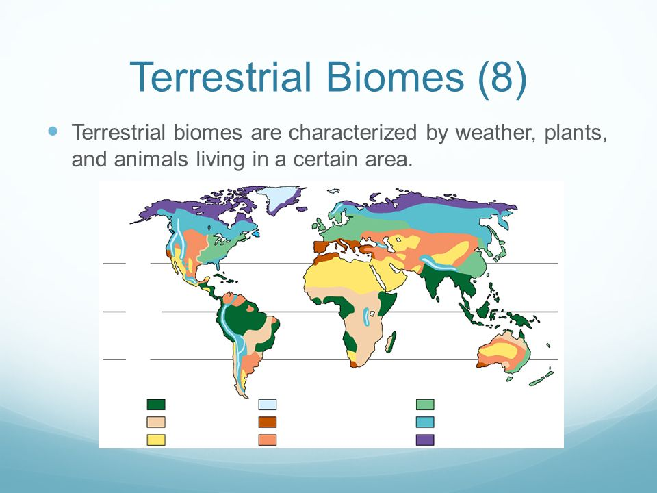 Ecology The Basics.