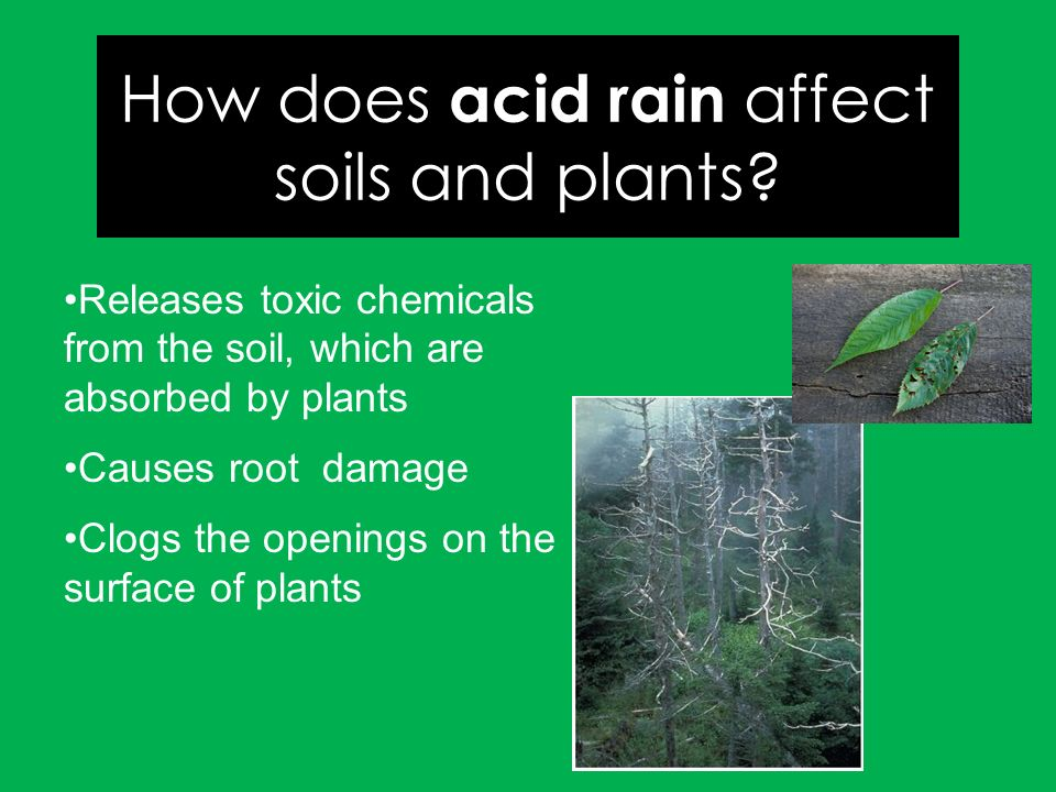 Activity: Radish plants (15) - ppt download