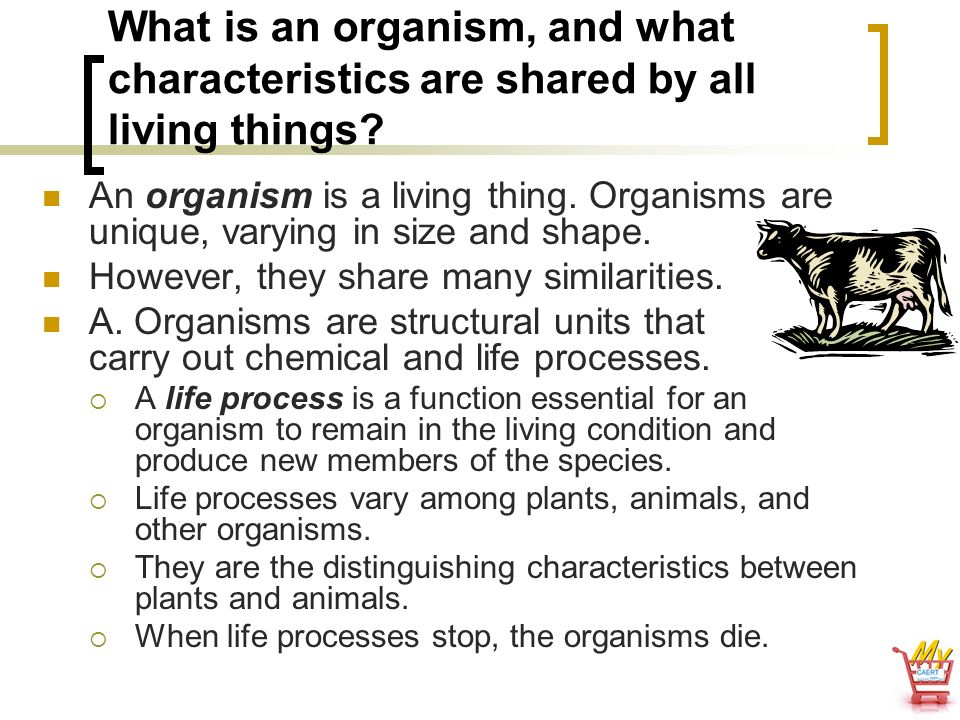 What is an organism, and what characteristics are shared by all living things